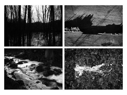 Paisajes sonoros en el bosque