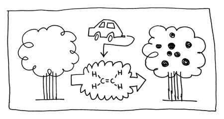 El etileno, los coches y los árboles.