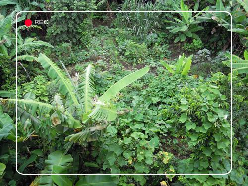 Pratiques de permaculture dans la cara be papirofilia for Exemple potager permaculture