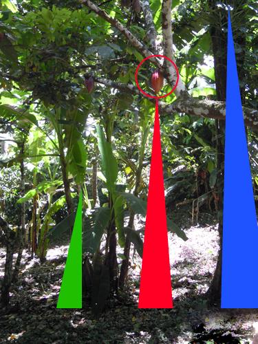 Estructura de la plantación