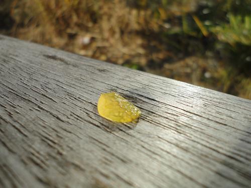 Gota con rocío sobre un banco