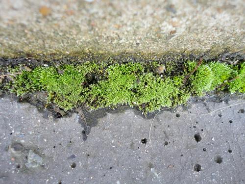 Los bordes del abismo mineral engendran la verdura