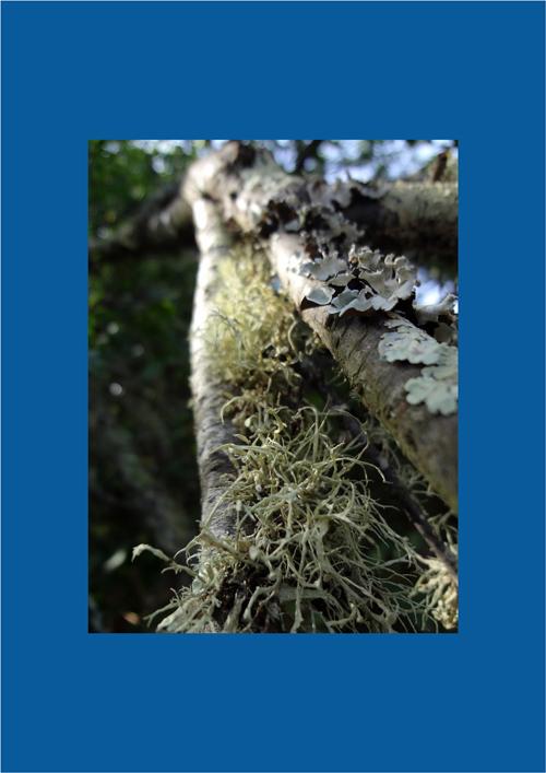Algas y hongos en simbiosis (entendida como convivencia o parasitosis)