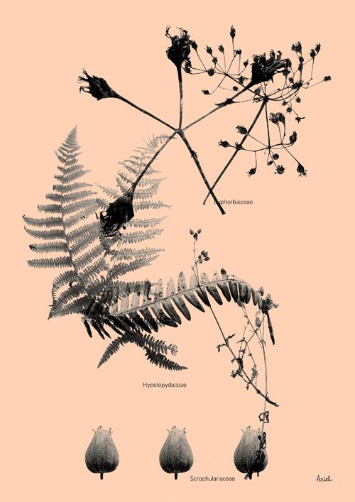 ramas y hojas