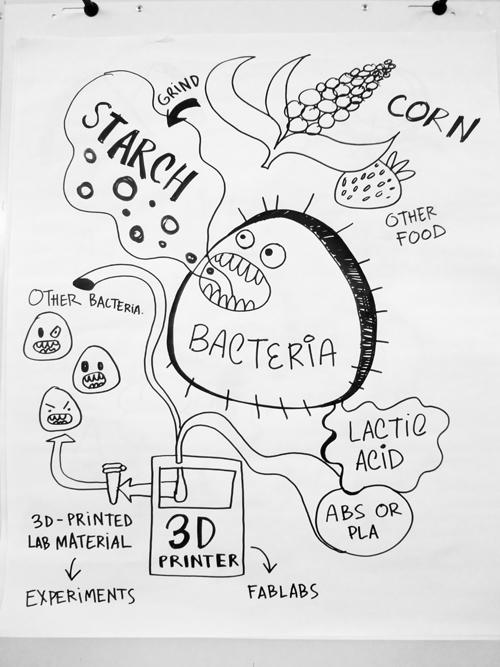 come come almidón, bacteria, y produce mucho ácido láctico para nosotros