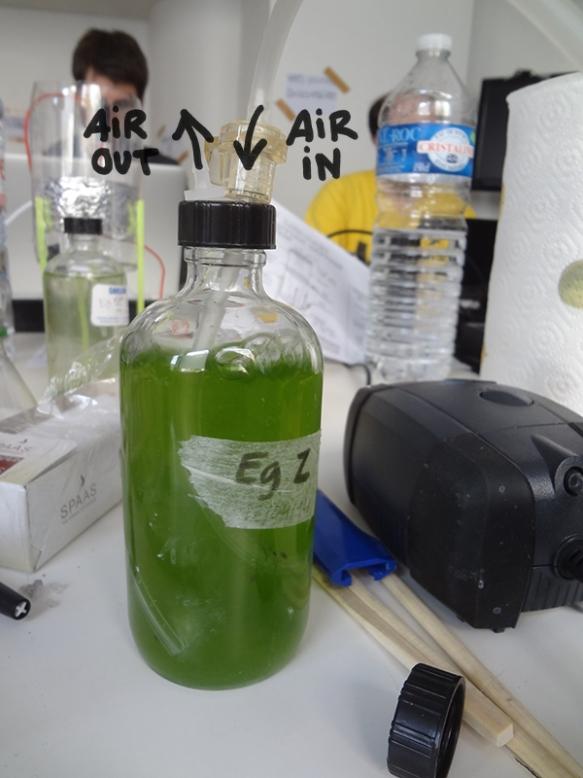 1177microbioreactor